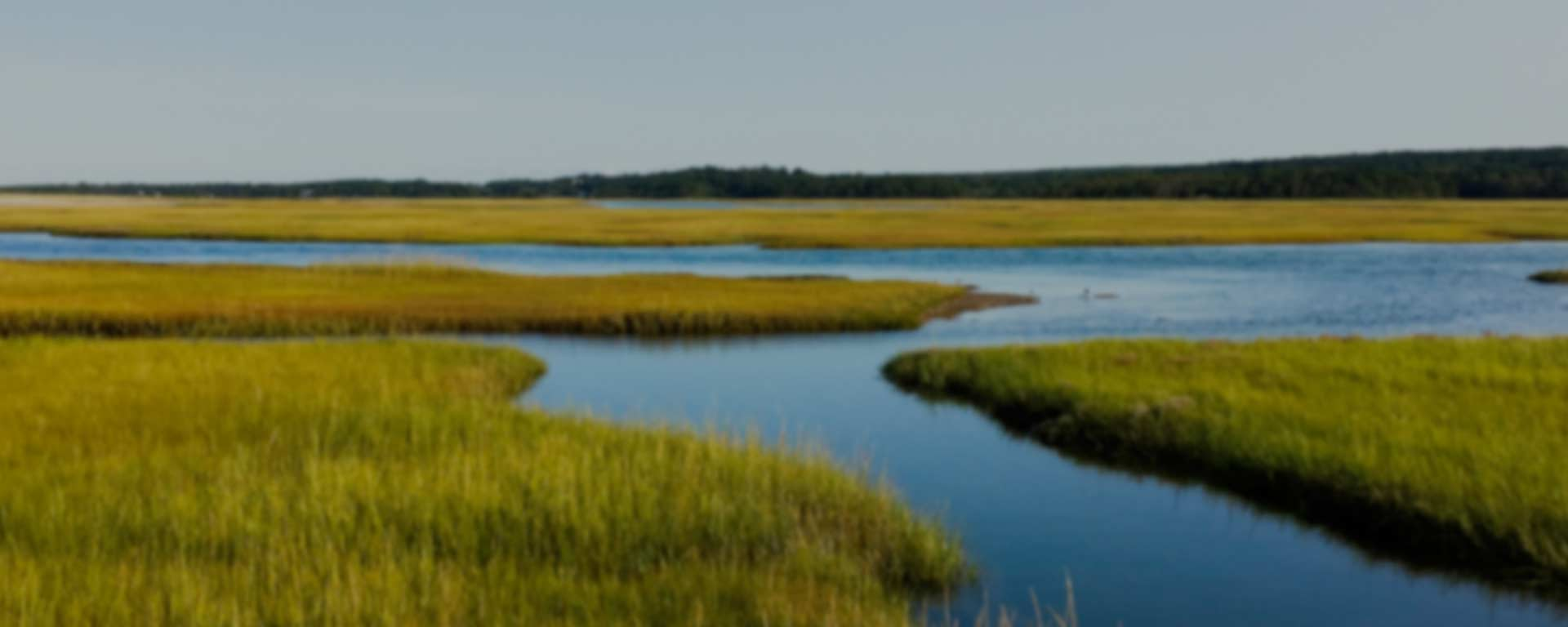 A river winds thorugh a green marsh on Cape Cod